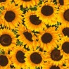 100% Cotton Fabric Timeless Treasures Sunflowers Floral Flowers