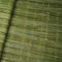 100% Cotton fabric Batik Bali One Tone Gradient Lines Fabric Freedom BK150 Col. E