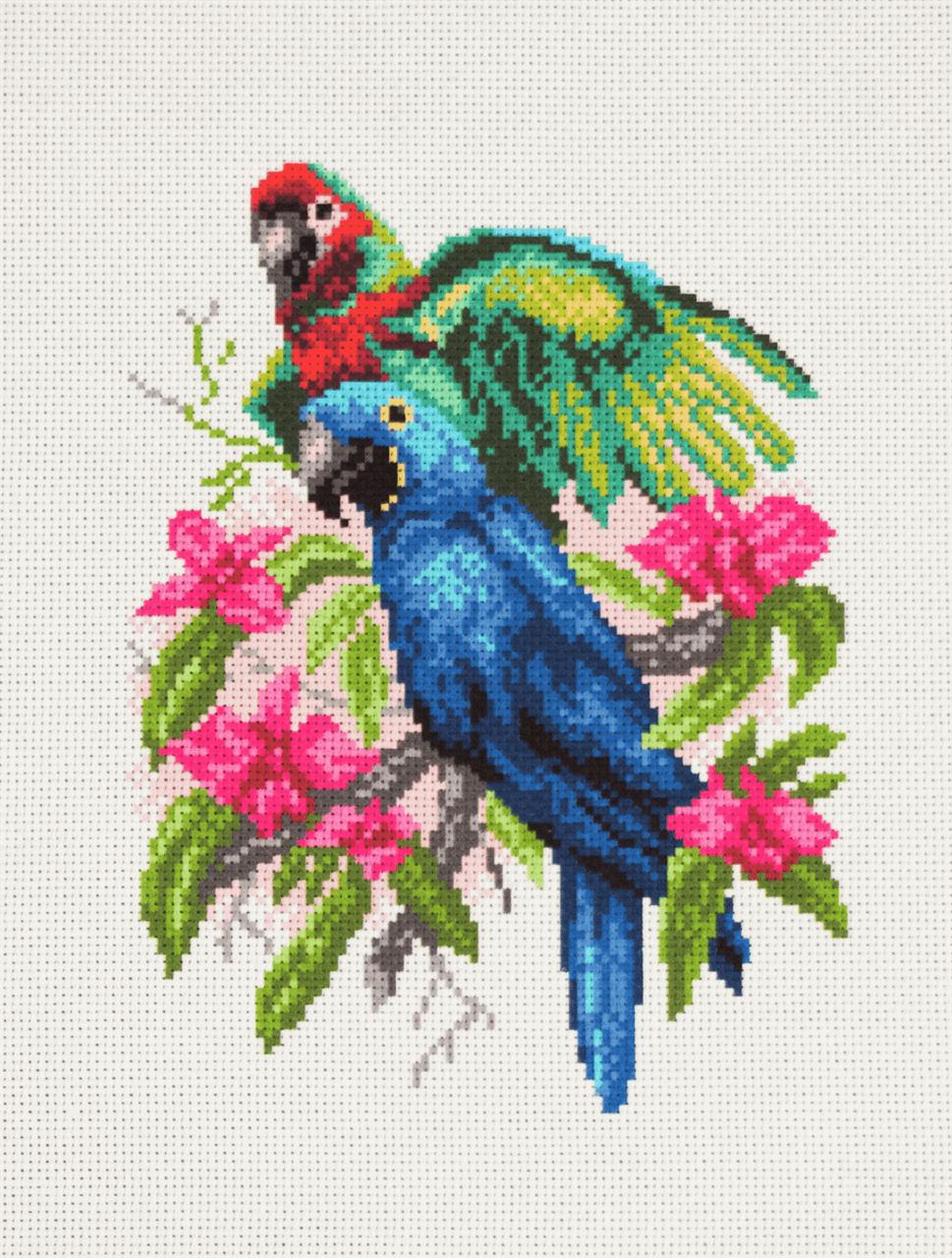 Collection dArt Parrots...